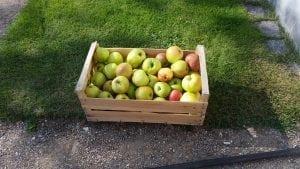 Kassevis af æbler blev til most