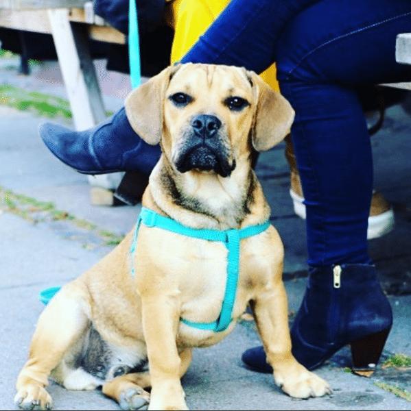 Hund på Nørrebro