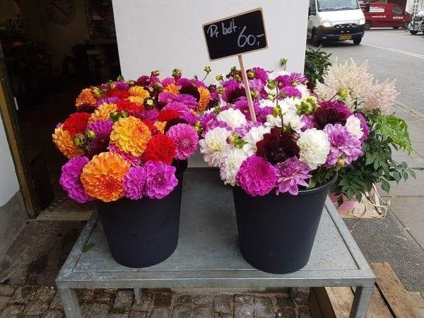Blomster i regn