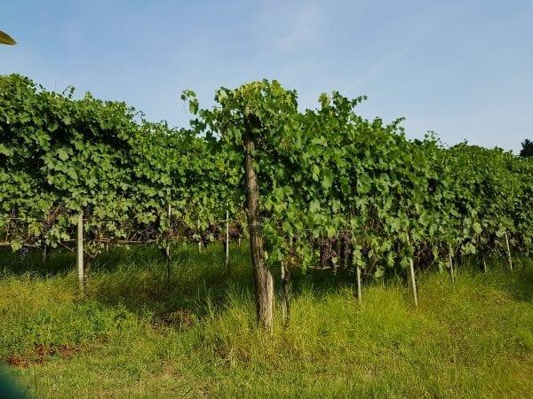 Skønne vine fra Holte Vinlager