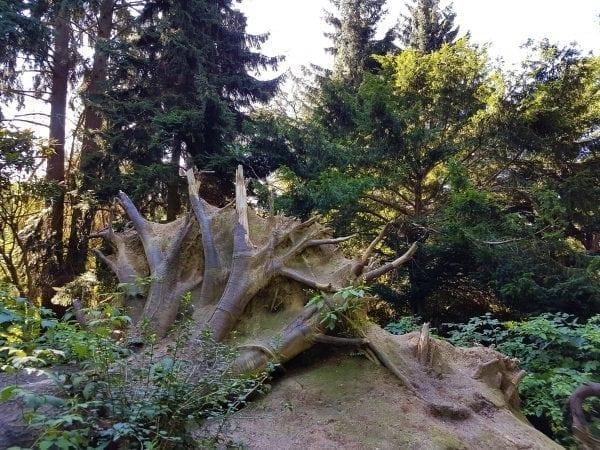 Sensommerdag i Forstbotanisk Have