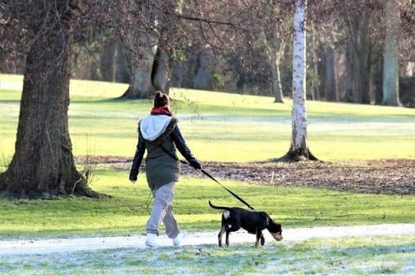 Fælles aften-gåtur for hunde med Maxi Zoo