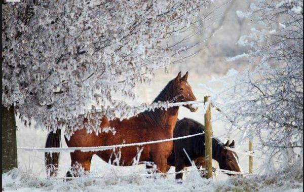 Dyrehavegaard inviterer til julehesteloppemarked