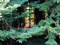 Skov, foto: ABW