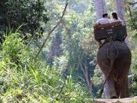 Ferierejsende skal kigge langt efter dyrevelfærd