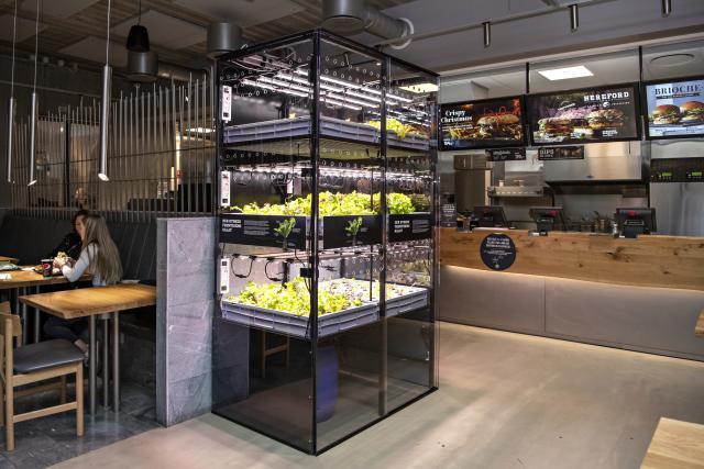Sunset Boulevard klar med banebrydende grønt initiativ: Vil dyrke salaten i restauranterne