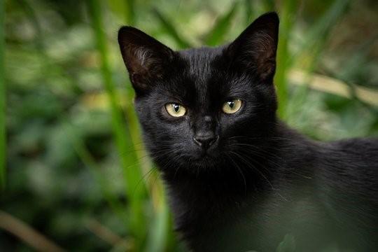 Ding-dong - undskyld, har du set en herreløs kat i dag?