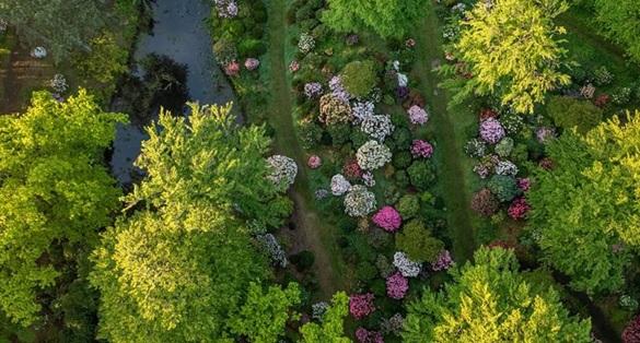 Rhododendronparken ved Nivaagaards Malerisamling