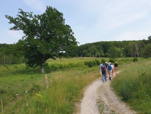 Mere natur: Ny vandrerute fra Roskilde Fjord til Øresund